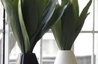 Architectural Pottery, contenedores para plantas